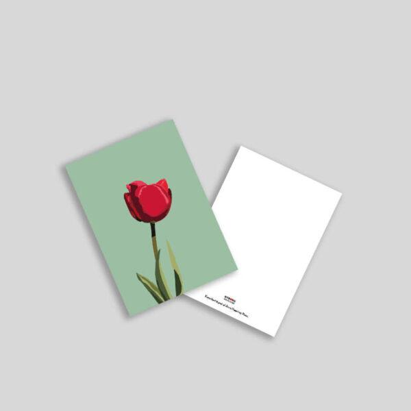 Tulipan illustration