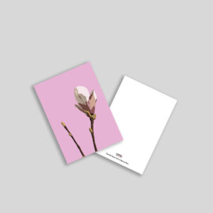 Tulipantræ illustration